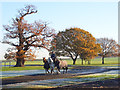 SU8372 : Gallop, Billingbear Park by Andrew Smith