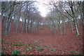ST9019 : Red carpeted slopes of Melbury Wood by Toby
