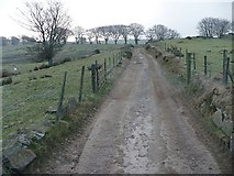 SO1802 : Track leading to Mynydd Pen-y-fan by Robin Drayton
