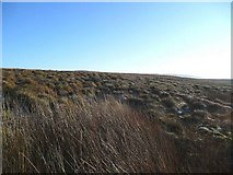 NS5732 : Bog and tussock on Auchmannoch Muir by Gordon Brown