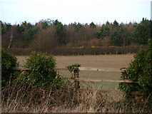 SP9833 : Fields and Trees by Dennis simpson