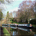 SO8687 : Boats and Birch Trees, near Ashwood, Staffordshire by Roger  Kidd