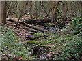 SP9938 : Damp Woodland by Dennis simpson