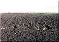 TL4884 : Farmland, Coveney Byall Fen, Cambs by Rodney Burton