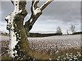 NT5933 : Winter farmland : Week 5