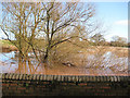 SO7726 : River Leadon bursts its banks by Pauline E