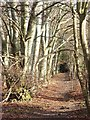 SU8395 : Footpath, West Wycombe by Andrew Smith