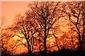NZ2665 : Sunset, Heaton Park, Newcastle upon Tyne : Week 7