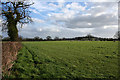 SJ5252 : Sheep pasture near Egerton Green by Espresso Addict