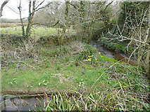 SW6833 : River Cober - upstream by Jonathan Billinger