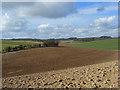 SU3078 : Farmland on the downs near Lambourn : Week 10