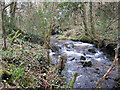 SX0069 : Stream in Hustyn Wood by Rod Allday