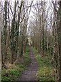 TL4254 : Bridleway through woods by Keith Edkins