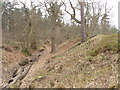 SU8665 : Bank and ditch of Caesar's Camp, Bracknell by David Hawgood