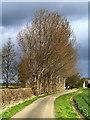 TA0649 : Trees near Decoy : Week 11