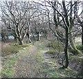 SE0417 : Path through the wood, Barkisland by Humphrey Bolton
