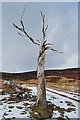 NO5390 : Remains of a tree on the track to Glencat by Nigel Corby: Week 12