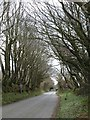 SX1084 : Lane approaching Trefrew by Derek Harper