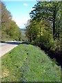 SX1661 : Bluebells by roger geach