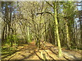 TQ4462 : Bridle path in Cuckoo Wood by Lindsey Coates