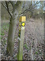 TQ4561 : Junction of footpaths north-east of Mace Farm by Lindsey Coates