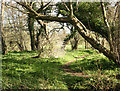 ST7163 : 2008 : Glade by Newton Brook near Englishcombe by Maurice Pullin