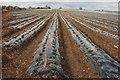SE8754 : Strawberry Fields Forever : Week 15