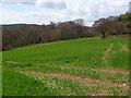 SU8193 : Farmland, Piddington by Andrew Smith