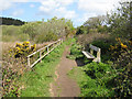 SW5131 : Footpath through Marazion Marsh Nature Reserve by Pauline E