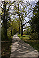 Dist:0.2km<br/>This new footpath runs beside an ancient hedge.  There are a number of oak trees growing near this path, which are just coming into leaf.