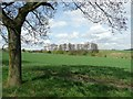 SE2913 : Sewage works and wooded bank, West Bretton by Humphrey Bolton