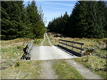 NS5904 : Forestry road by david johnston