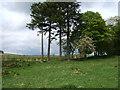NJ5803 : Trees by old Deeside Railway by Stanley Howe