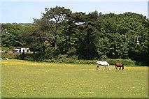 SW7342 : Horses Grazing by Tony Atkin