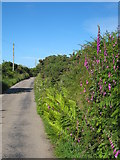 SW7133 : Minor road between Retanna and Rame Common by Rod Allday