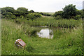 TQ5301 : Winchester's Pond, Lullington Heath, above Litlington, East Sussex by Kevin Gordon