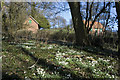 SP7820 : Snowdrops in Bunces Lane, Oving by Michael Stallwood
