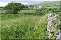 M1205 : Grassy field bordered by drystone dyke along the R477 road by C Michael Hogan