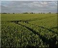 TL5159 : Tramlines in the wheat by Hugh Venables