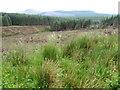 NS5207 : Forest towards Linn Water by Chris Wimbush