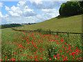 SU7796 : Farmland, Stokenchurch by Andrew Smith