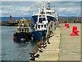 J5082 : Black Guillemots, Bangor [9] by Rossographer