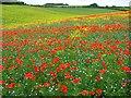 SU3977 : Colourful farmland, Great Shefford : Week 28