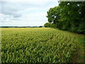 TL1079 : Wheat in West Cambridgeshire 2 by Jonathan Billinger