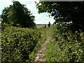 SE2506 : The bridleway at Gadding Moor Plantation by John Fielding