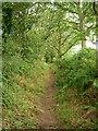 SJ3174 : Bridleway between Haddon and Burton Woods by David Quinn