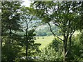SE2900 : View through the trees towards Huthwaite by Wendy North