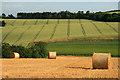 NT5943 : Farmland at Legerwood : Week 30