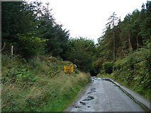 N9301 : Road Through Hollywood Glen by Ian Paterson
