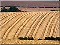 SE9436 : After the Harvest : Week 33